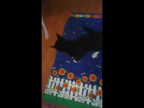 KAT's Cats and Dogs in my care Videos(2)