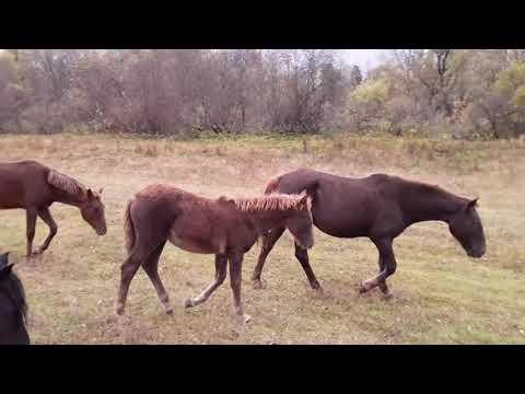 Лошади. Осенняя природа.