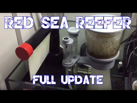 Red Sea Reefer 250 | Full Update | Current Tank Progress & Possible Future Plans