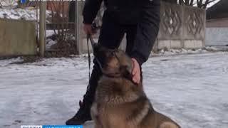 Власти Балтийска намерены два раза в неделю проводить отлов бродячих собак