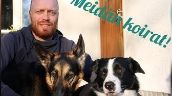 KOIRAHUIJAUS | Esittelyssä meidän koirat