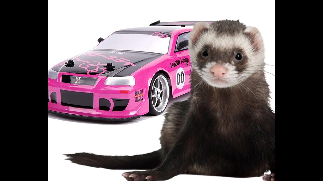 Ferrets And A Hello Kitty Drift Car