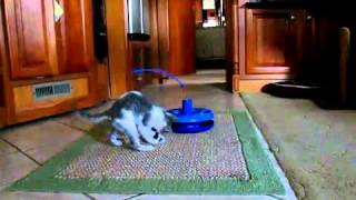 Kitty-go-crazy Интерактивная игрушка для кошек 3 в 1