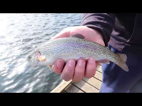 Catching Many Trout At Como Lake!