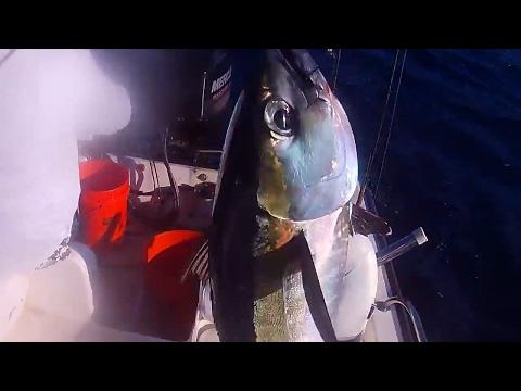 Black fin Tuna pinwheeling