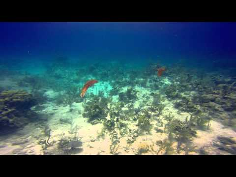 Grand Turk Diving July 2015