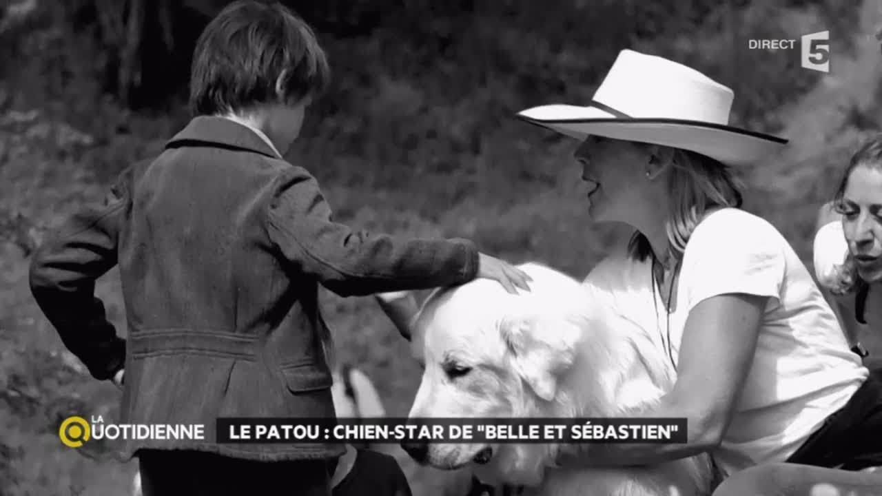 Le Patou Chien Star De Belle Et Sébastien
