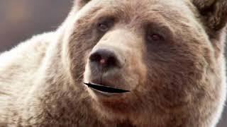 Brown Bear Breakout Clue #2