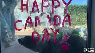 Toronto Zoo Animals Celebrate Canada Day