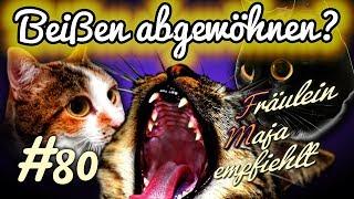 Katzenbisse - Erziehung how to - Beißen und Kratzen abgewöhnen!#080