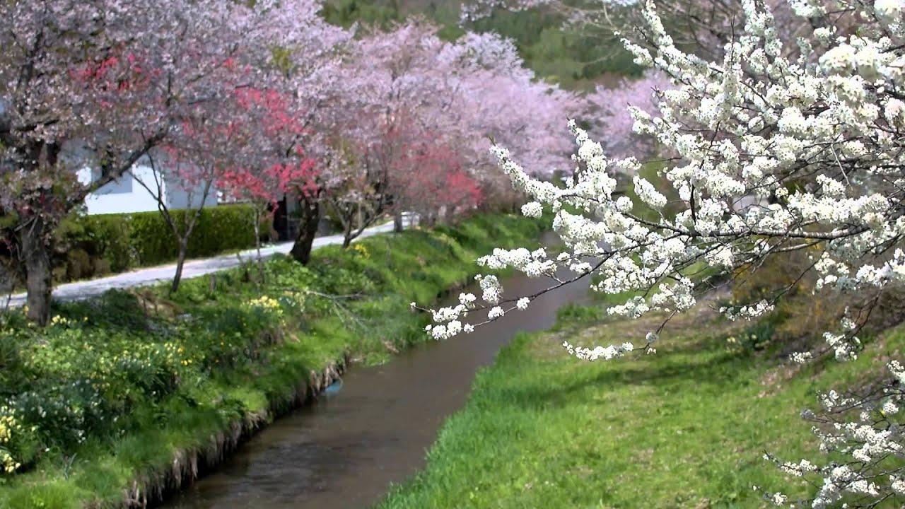 late spring season oshino hakkai youtube