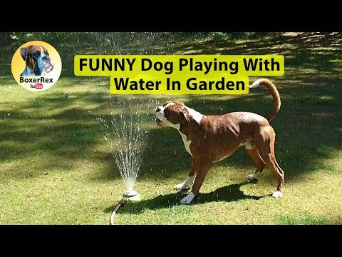 FUNNY Dog Playing With Water In Garden 😂