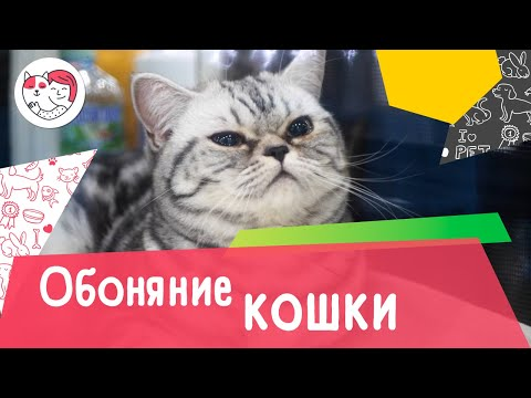 Вопрос: Правда ли что слух и обоняние кошек и собак превосходят человеческие?