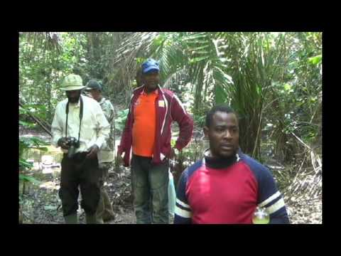 Mining in Cameroon