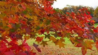 Finding The Best Fall Colors