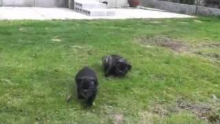 モコとアイスの外遊びの動画です。