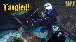 Little River Cave Dive Vlog | BLUE WORLD VLOG