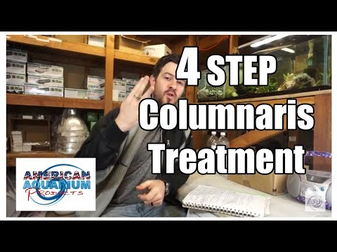 How To: 4 Steps Columnaris Treatment Fish Bacterial Infecton