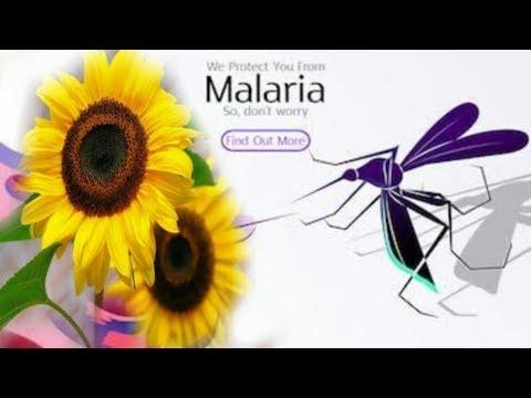 cara-membuat-obat-herbal-untuk-penyakit-malaria