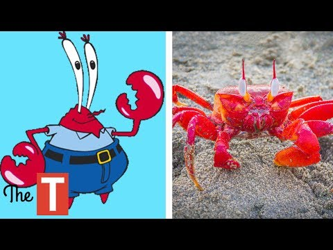 Thumbnail: 10 Spongebob Squarepants Characters In Real Life
