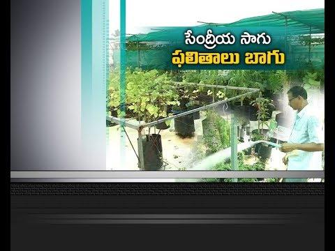 Organic Farming at Rooftop | A Veteran Turns into Model Farmer | Valluru