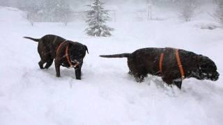 新雪の中を爆走するマチカグ.