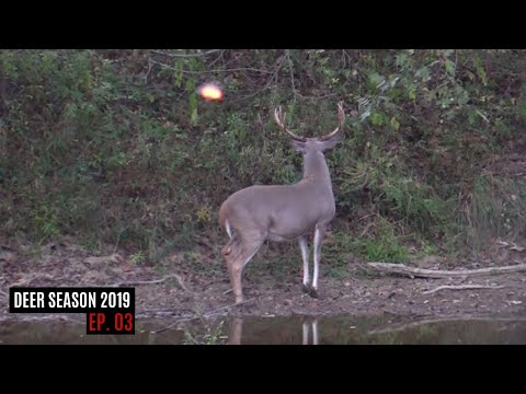 Arrow Released On A Public Land Kentucky 10 Point...