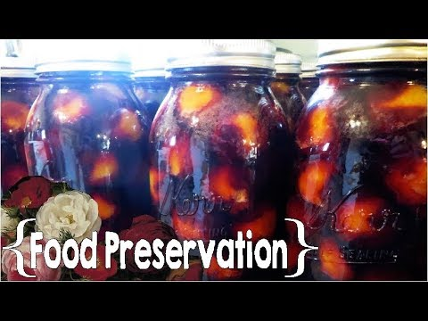 Basic Water Bath Canning ║ Plums │Food Preservation
