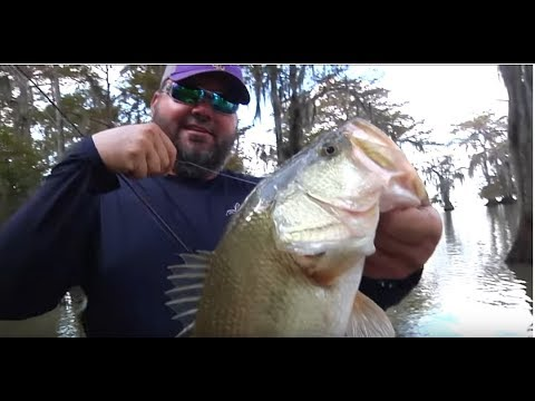 Catching Bass On Cypress Trees With Greg Hackney