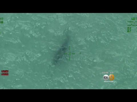Thumbnail: Another Shark Sighting Forces Advisories For O.C. Beaches