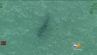 Another Shark Sighting Forces Advisories Beaches