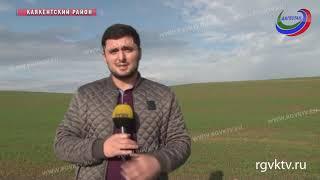 Победить сорняк  удалось сельхозпроизводителям Каякенткого  района