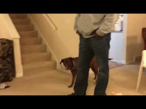 Smart Dog Understands When Her Human Spells W-A-L-K!