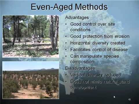 Silviculture for Pinyon Juniper Ecosystems