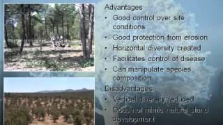 Silviculture for Pinyon Juniper Ecosystems