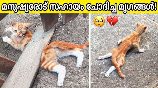 Animals That Asked People for Help !