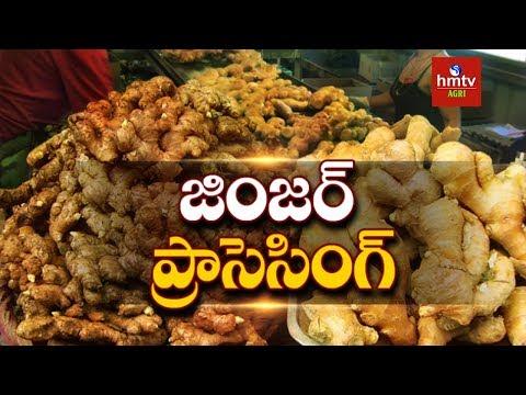 Ginger Processing Guide By Mynampati Sreenivasa Rao   Food Processing   hmtv Agri