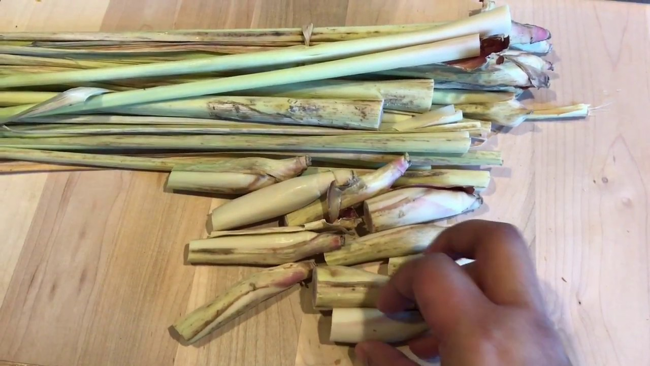 How To Grow Lemongrass From Cuttings - YouTube