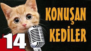 Konuşan Kediler 14 - En Komik Kedi Videoları