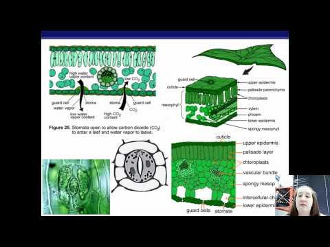 Plant Anatomy.mp4