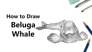 How to Draw a Beluga Whale with Pencils [Time Lapse] YouTube