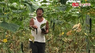 農地因政策變建地 續務農數十年卻突失農保