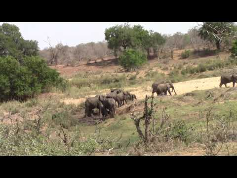 Elephants enjoy the waterhole, Kruger National Park