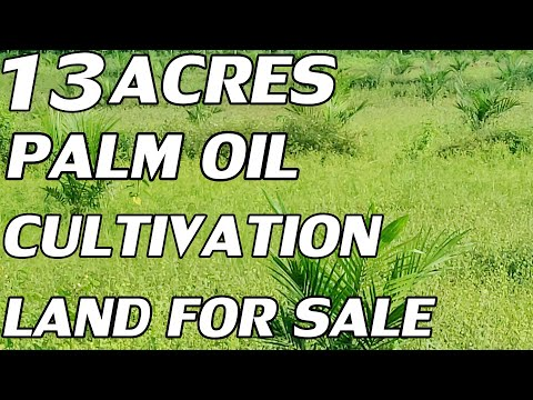 13 ACRES PALM OIL CULTIVATION LAND FOR SALE | COMPACT PROPERTY SALE | PROPERTY PROMOTION TV LANDS