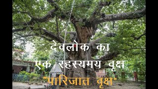 Parijaat tree.MOV