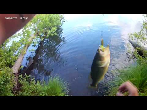 Bass Fishing At Blydenburg Lake