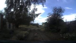 Кошка гадит на дорогу
