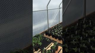 Kendo Farms  Featuring Helios Greenhouses and Solawrap