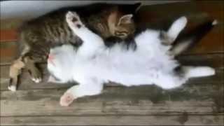 колыбельная для кошек