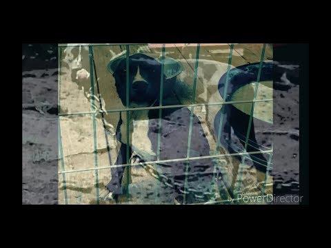 T-MACK'S GARGOLA (2XW) PURE BLACKROCKS MEXICO ELI   FunnyDog TV